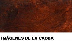 madera de caoba fotos