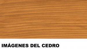 madera de cedro fotos