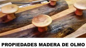 madera de olmo propiedades
