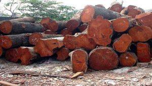 imagenes de la madera de caoba
