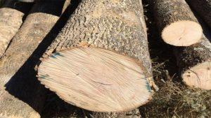 foto de la madera de fresno