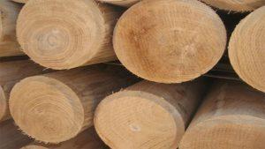 fotos de la madera de roble